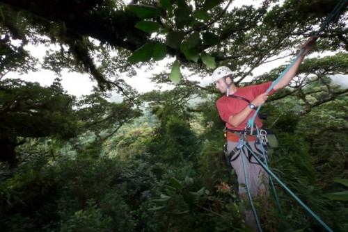 rainforest climbing