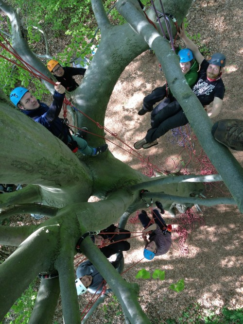 Denmark tree climbers learning the ropes