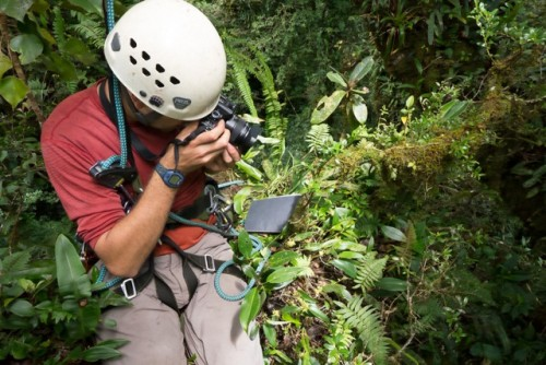 collecting data in the cloud forest