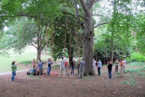 tree climbing course at NCSU
