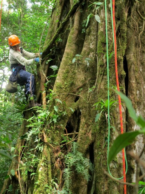 climbing around in the rainforest