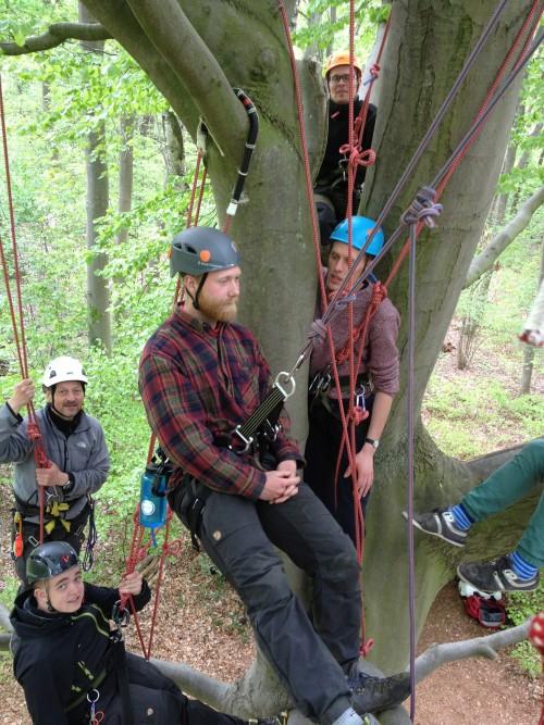 tree climbing in Denmark
